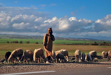 Algeria: Tousnina Sarl